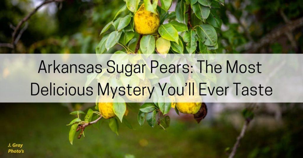 Arkansas sugar pears